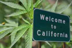 REPORT: California Encouraging Banks to Do Business with Cannabis Industry