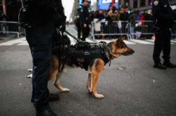 REPORT: New Jersey Police to Stop Using K9s to 'Sniff Out' Marijuana, Cannabis