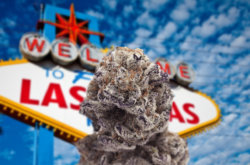 REPORT: 11 Cannabis Businesses in Nevada Sue State, Asking for Transparency