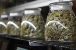 REPORT: Massachusetts Cannabis Consumers Could End Up with Home Delivery of Marijuana