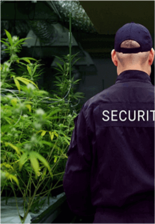 Cannabis Industry Security Plans